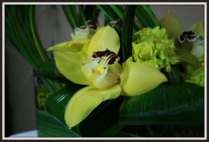 cymbidium amarillo