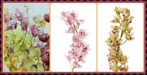 Tallos de orquideas