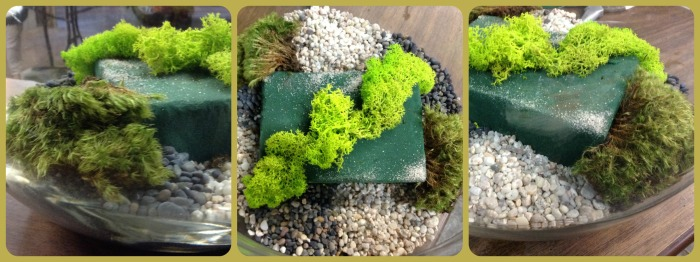 2 tipos de musgo que contrastan