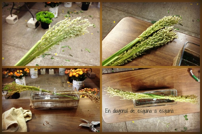 Ponemos corn broom