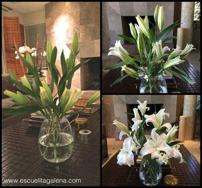 florero con casablancas abriendose
