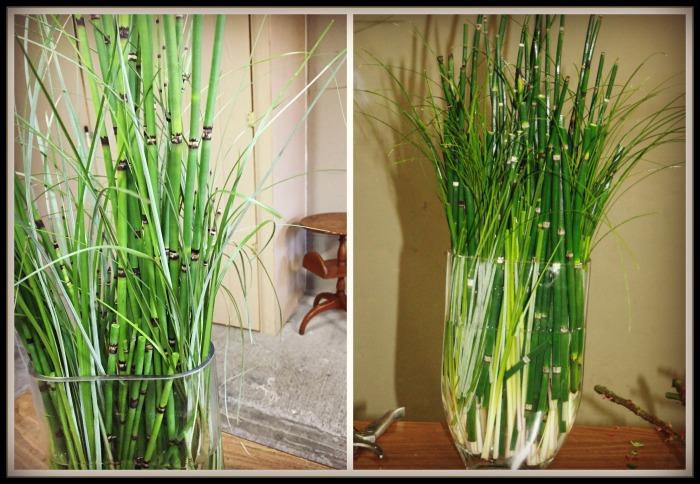 agregamos el cebollin (beargrass)