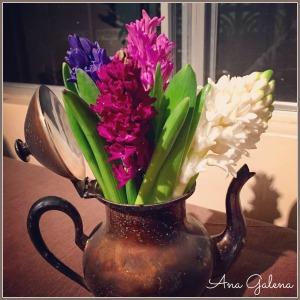 Cafetera antigua con jacintos de colores