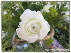 renacula blanca