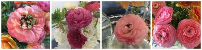 renaculas rosas