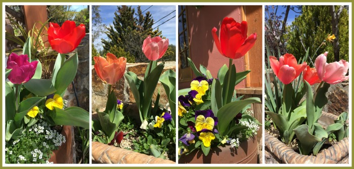 Tulipanes por todos lados