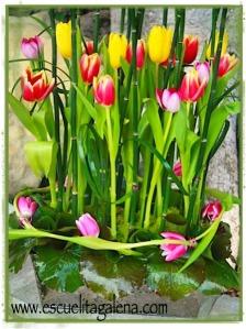 tulips tulipanes entrelazados