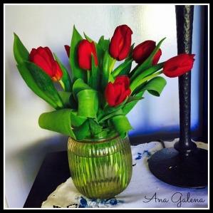 tulips tulipanes rojos