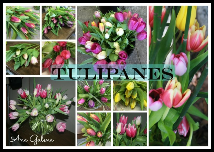 tullips tulipanes