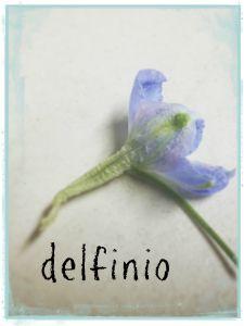 delfinio delphinium